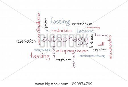 Autophagy Hand-drawn Word Cloud Concept. Vector Illustration.