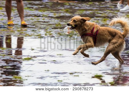 A Dog Playing On The Wet Streets In São Paulo, Brazil