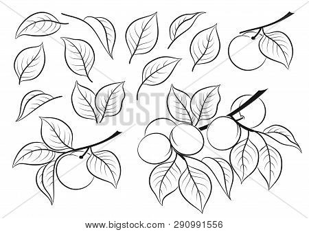Set Of Cherry Plums, Berries And Leaves, Black Pictograms Isolated On White. Vector