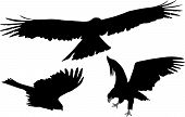 Some silhouettes of eagle's flight and landing poster