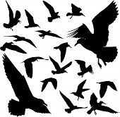 Some silhouettes of seagulls flying on white poster