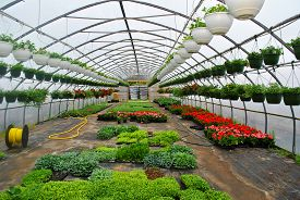 Growing Potted Plants In A Springtime Greenhouse