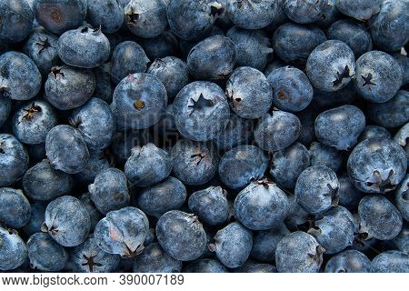 Organic Blueberry Background. Fresh Bilberries. Close-up Background. Background From Freshly Picked
