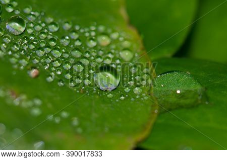 Dewdrop On The Surface Of A Leaves.