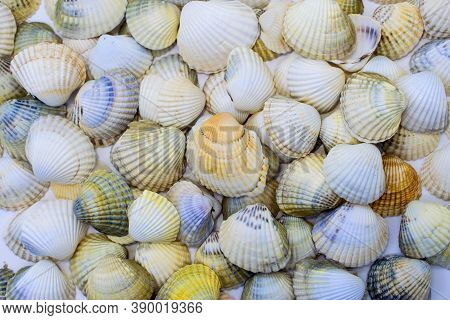 Background From Multi-colored Ribbed Seashells. Seashells On A Light Background