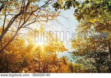 Autumn landscape, autumn tree tops against blue sky, autumn forest trees, autumn background. Autumn trees in the forest, autumn forest scene, autumn tree tops in sunny autumn day. Auutmn forest nature