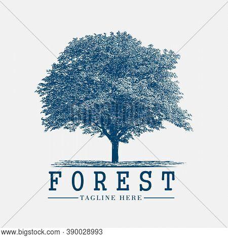 Forest Tree Vintage Logo Vector, Sign, Nature, Symbol, Label, Graphic, Emblem, Retro, Design, Silhou