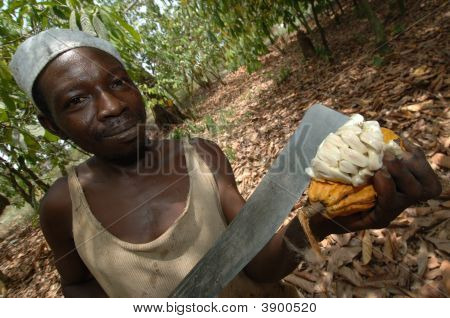 Checking Cocoa