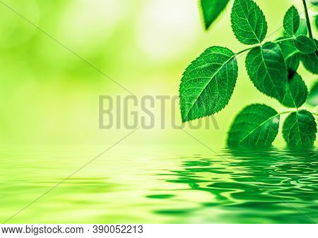 Green Leaves And Spring Water,  Eco Nature And Bio Energy Background