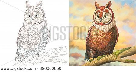Coloring Page Owl Vector Photo Free Trial Bigstock