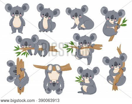 Cute Cartoon Koala. Lazy Koalas With Eucalyptus. Little Funny Rainforest Animals. Australian Bear Sl