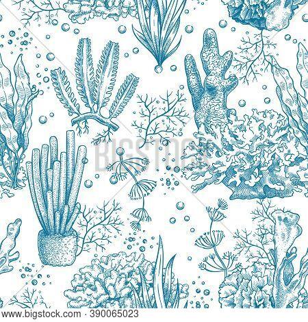 Seaweed Seamless Pattern. Reef Aquatic Plants And Corals, Underwater Sea And Aquarium Life Nautical