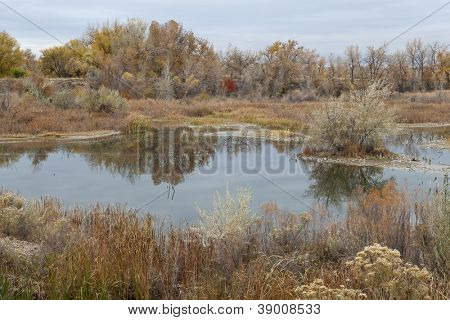 gravel pit converted into natural area - Riverbend Ponds, Fort Collins, Colorado in late fall scenery with rabbitbrush and cattails