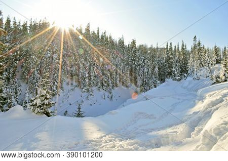 Beautiful Winter Landscape With Snow Covered Treeswinter Snow Forest Landscape. Winter Snowy Forest.