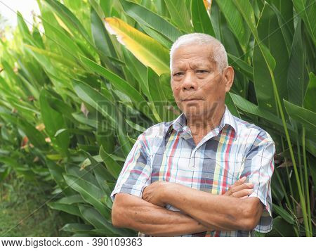 Portrait Of Senior Asian Man Looing At Camera And Arms Crossed While Standing In A Garden. Space For