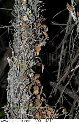 Trunk At Night With A Multitude Of Leaves And Branches Around