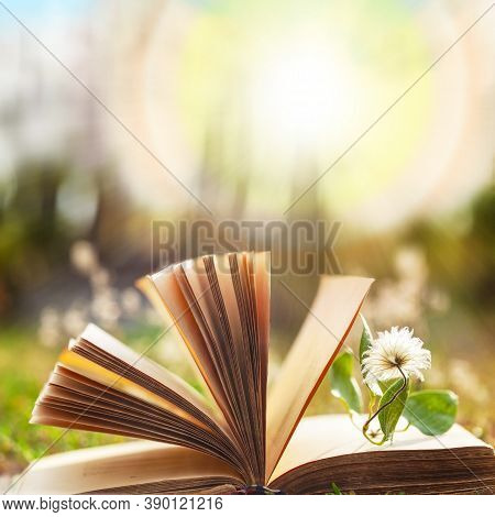 Opened Book.natural Background With An Open Book. Blurred Background Of An Open Book With A Flower B