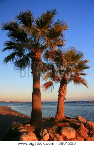 Couple Of Palm Trees On A Beach