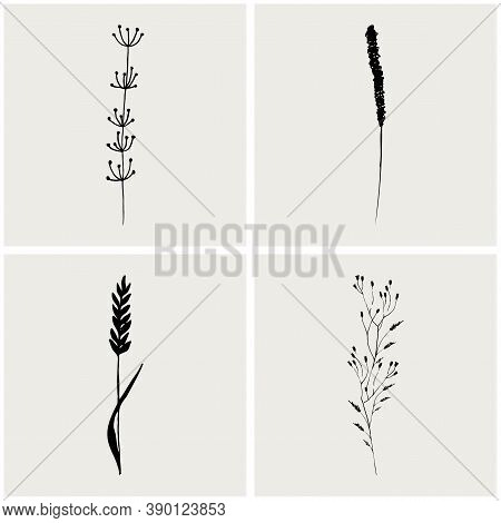 Logo Branch. Hand Drawn Wedding Herb. Plant And Leaves For Invitation Card Design. Botanical Rustic