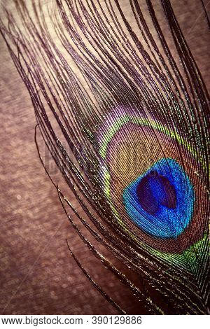 Multi-colored Peacock Feathers. Peacock Feather On A Red-brown Background With Bokeh. Grunge Backgro