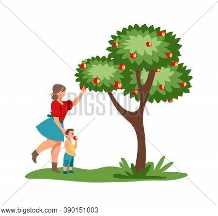 Harvesting. Mother And Child Pick Red Apples In Garden. Cartoon Female With Kid Walking In Park. Cut