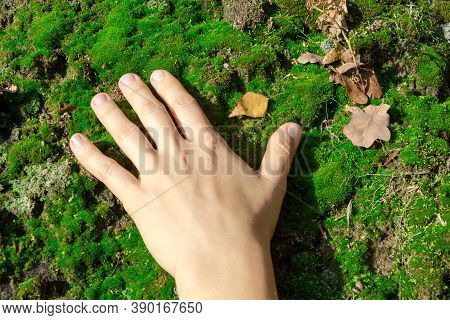 The Girl Is Hand Touches The Green Moss Carpet, A Pair Of Autumn, Fallen Leaves Are Visible, The Con