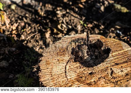 Old Rotten Wood Of A Rotten Tree. Weathered Trees Are Destroyed. Background Or Texture. Wood Rot-ori