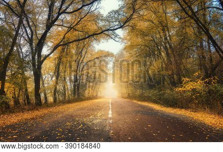 Autumn Forest In Fog With Country Road At Sunset. Colorful Landscape With Rural Road In Tunnel Of Tr