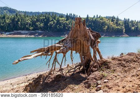An Old Tree Stump Seems To Be Levitating Above The Ground On An Embankment Of Lost Creek Lake From Y