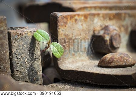 Green Sprout Grows In A Scrap Metal Dump. A Young Sprout Grows In A Polluted Environment. A Sprouted