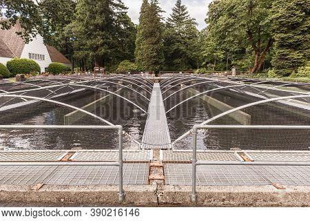 Cascade Locks, Oregon - June 26, 2018: Basins In Bonneville Fish Hatchery In Oregon, Usa