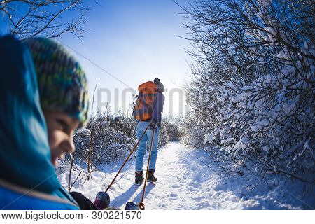 A Woman Pulls A Sled With A Child. Mother Walks With Her Son Through A Snowy Forest. Winter Walk In