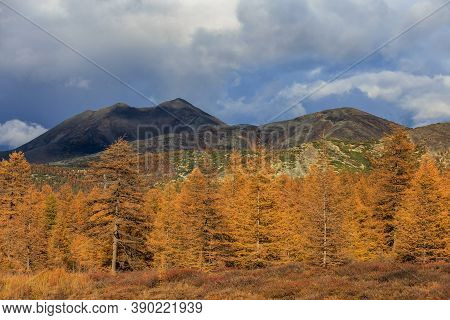 The Nature Of The Magadan Region. Bright Low Hills In The Tundra, Covered With Grass And Colorful Tr