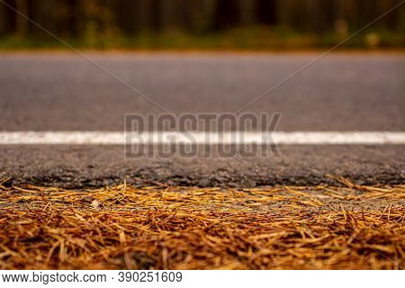 The Roadside Of A Forest Road With Many Pine Needles On The Background Of A Forest Thicket. Selected