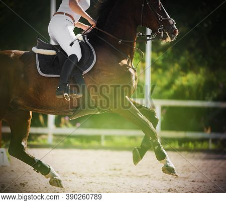 A Dark Bay Racehorse Gallops Quickly With Rider In The Saddle On The Sandy Arena, Illuminated By The