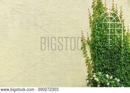House Wall Overgrown With Ivy And Flowers, Outdoor Detail For Background. Yellow Plaster Of Modern R