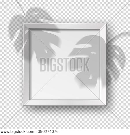 Vector Realistic Square Empty Picture Frame With Monstera Shadow Overlay Effect. Mockup Template Wit