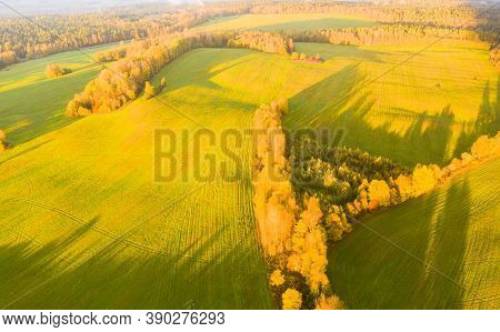 Aerial View Of Agricultural Green Field. Plowed Agricultural Field. Aerial View Autumn Field. Agricu