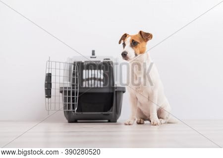 An Obedient Jack Russell Terrier Dog Sits Next To A Travel Box While Waiting For A Trip. Travel Conc