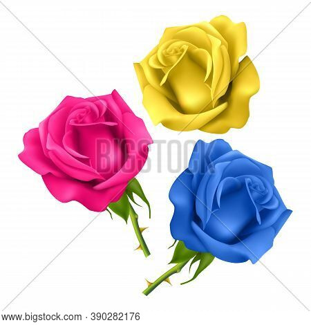 Set Of Realistic Roses On A White Background, Isolated Roses On A White Background Of Pink, Blue And