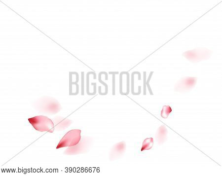 Pink Sakura Flower Flying Petals Isolated On White. Creative Floral Background. Japanese Sakura Peta