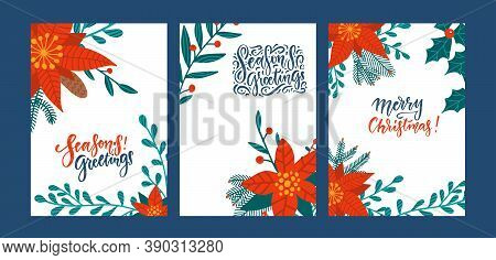 Set Of Greeting Cards With Poinsettia Flowers. Red Poinsettia Christmas Greens Leaves And Holly Berr