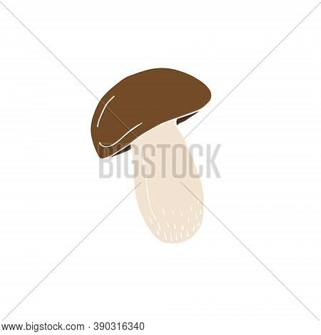 Vector Hand Drawn Doodle Sketch Colored King Bolote Cep Mushroom Isolated On White Background