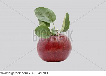 Red, Ripe Apple Isolated On Gray Background.