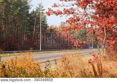 Straight Section Of The Motorway With Traffic Barriers, Lampposts And Forest On Both Sides At Autumn