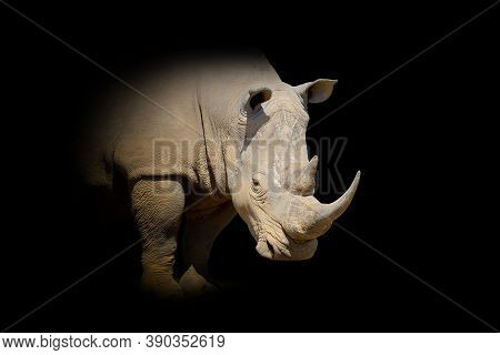 Close Up View Rhino. Wild Animal Isolated On A Black Background