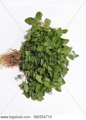 Closeup Of Amaranthus Viridis Or Green Amaranth Bunch Isolated On White Background In Vertical Orien