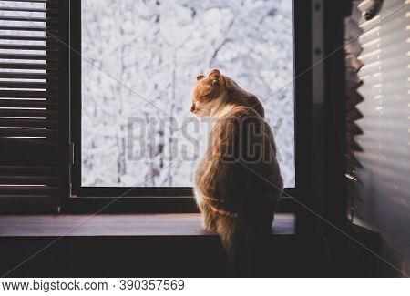 Cute Cat Sitting On Window Sill And Enjoying Winter
