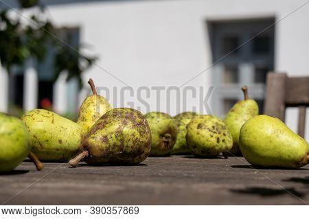 Some Organic Pears On The Table, Outdoors