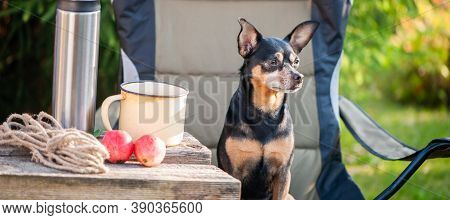 Tourism And Camping Theme With Dog. Banner. A Cute Dog Sits Outdoors In An Equipped Camp On A Campin